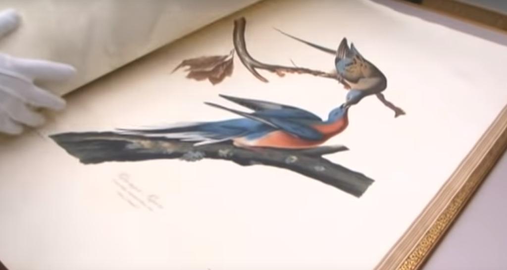 Птицы Америки. Самые дорогие книги в мире. 8 книг, купленных за рекордные деньги