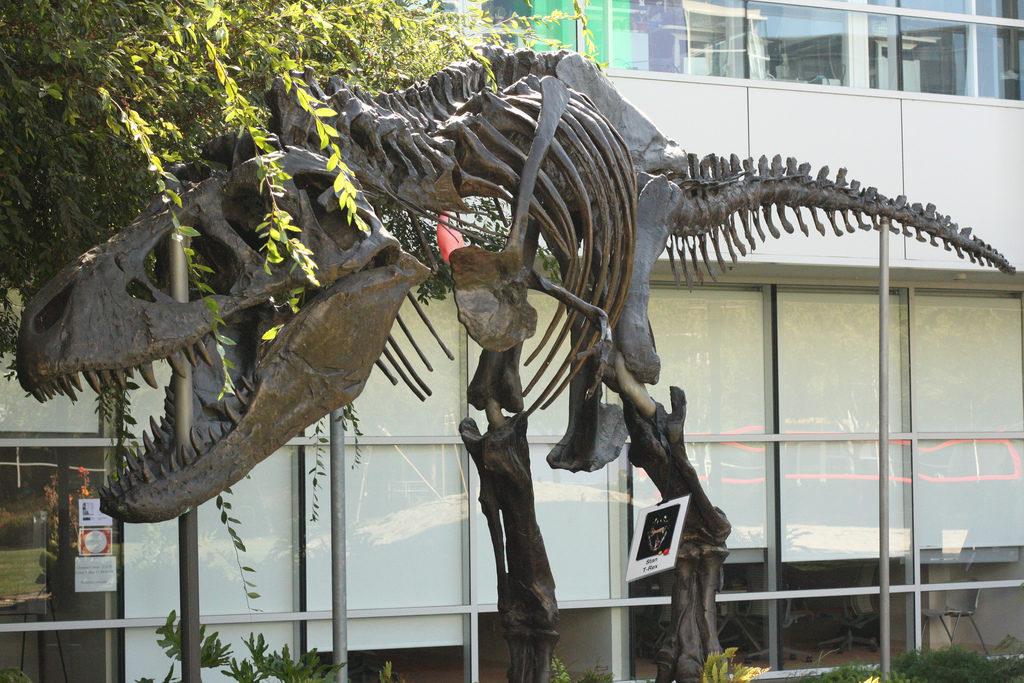 Скелет тиранозавра. Кампус  Google. Способности и возможности компаний демонстрируют противоположно направленные тенденции